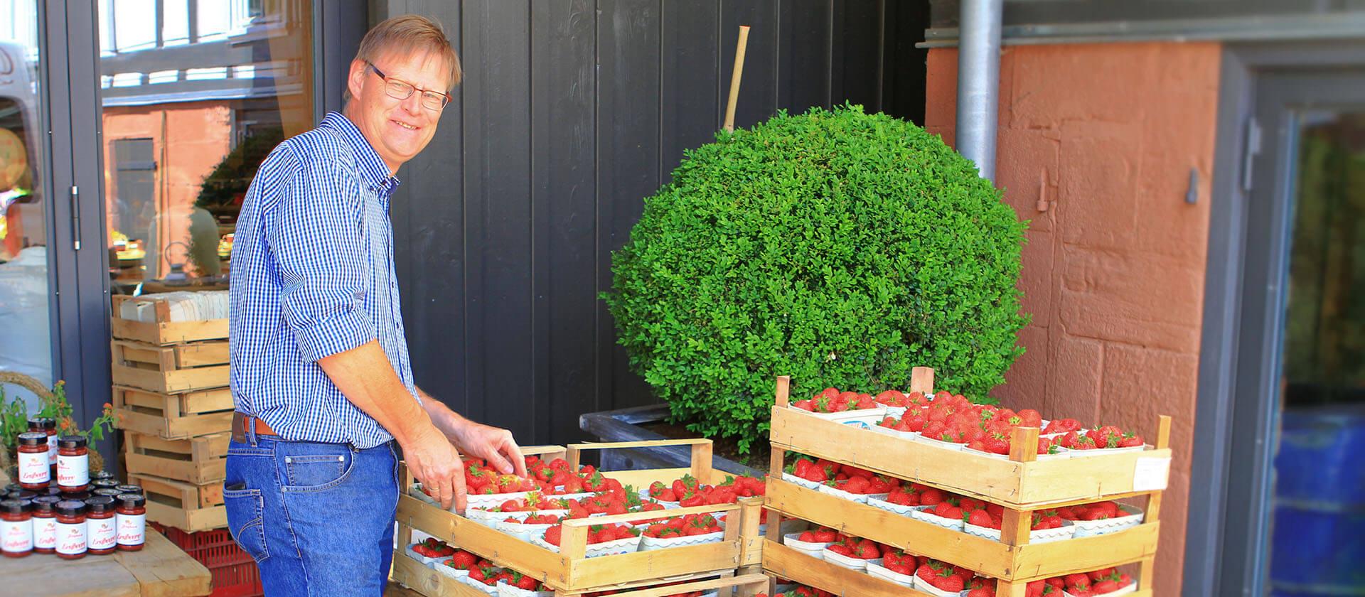 Erdbeerernte auf dem Hofgut Dagobertshausen