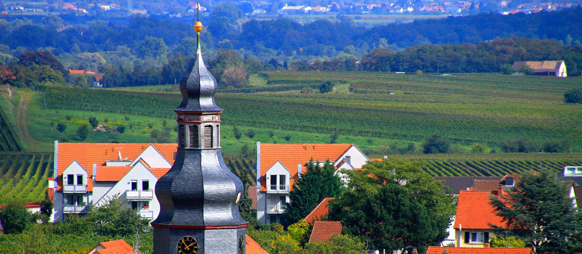 Weinberge in Kallstadt an der Weinstraße